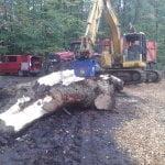 Die Kraft der DKS250-Kegelspitze spaltet robuste und dicke Baumstämme in nur kurzer Zeit